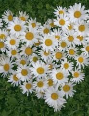 http://www.telpics.ru/cache/flowers/telpics_ru_316488146_185x240.jpg