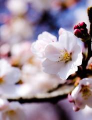 Картинки с весной на телефон