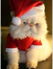 Картинка кот заглядывает - aea2
