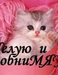 Любовь и котики on Vimeo