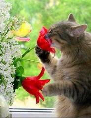 Красивая персикового цвета кошка, обои с кошками 83