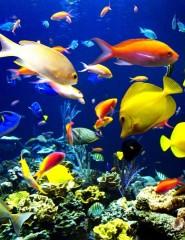 картинки на телефон подводный мир.
